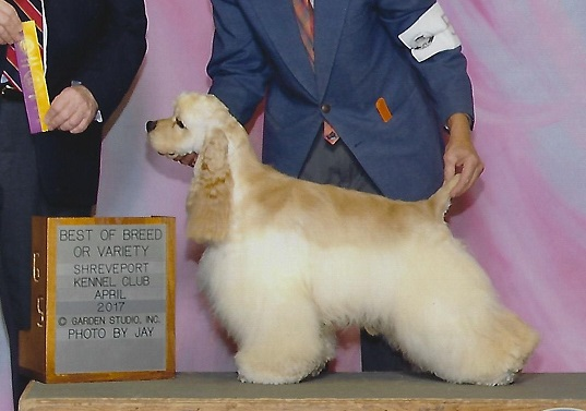Best of Breed Cocker Spaniel